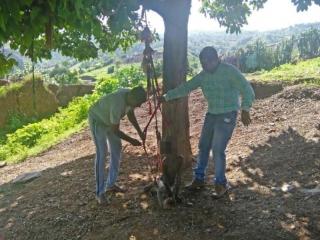2 پسر بچه 5 سال به درختی بسته شده بودند