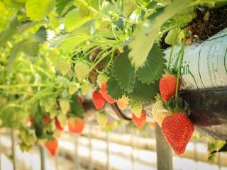 محصولات ارگانیک یا طبیعی چیستند و چه فوایدی دارند؟