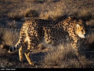 کدام حیوان نماد کدام ورزش ایران است؟