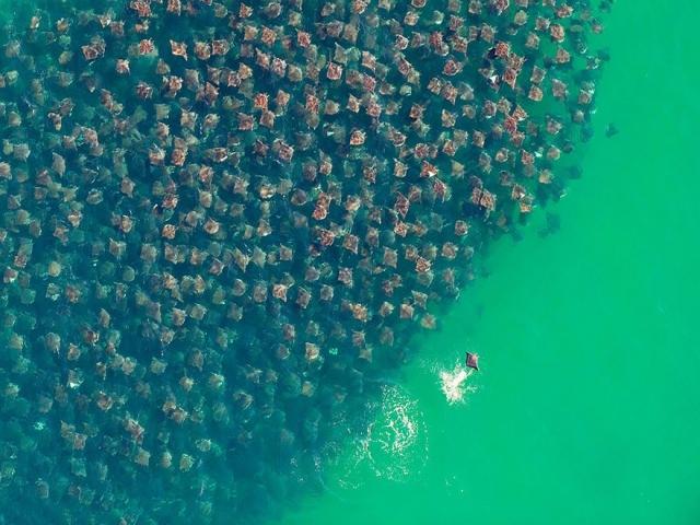 تصاویری از مهاجرت دسته جمعی حیوانات