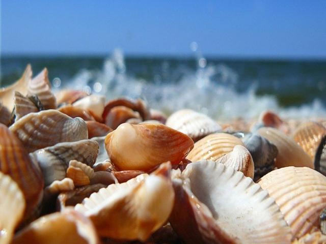 آشنایی با صدف دریایی