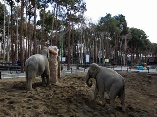 باغ وحش های تهران