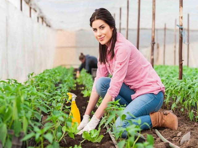 ایده های کارآفرینی کشاورزی