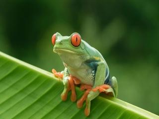 حیوان دوزیست چیست و دوزیستان کدامند؟