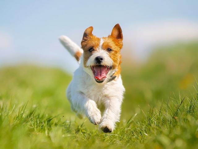 26 آگوست ، روز جهانی سگ