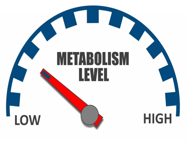 متابولیسم در استراحت ! RMR