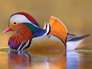 زیباترین گونه های پرندگان جهان
