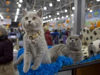 برگزاری فشن شو گربهها در تهران