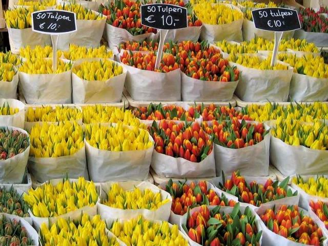 آشنایی با صنعت و تجارت گل