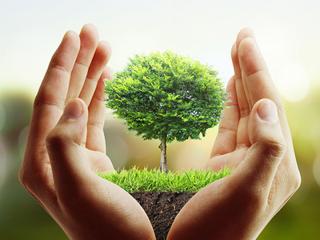 تصاویر پروفایل روز درختکاری