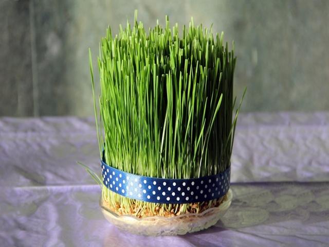 کاشت سبزه در سریع ترین زمان قبل نوروز