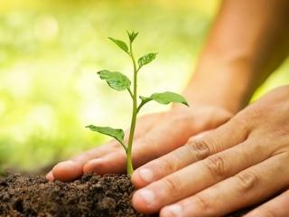 آموزش کاشت نهال درخت