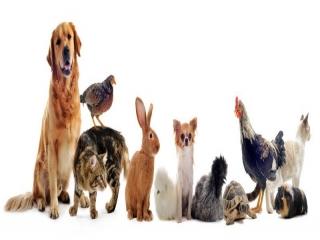 نگهداری کدام حیوان خانگی بهتر است؟