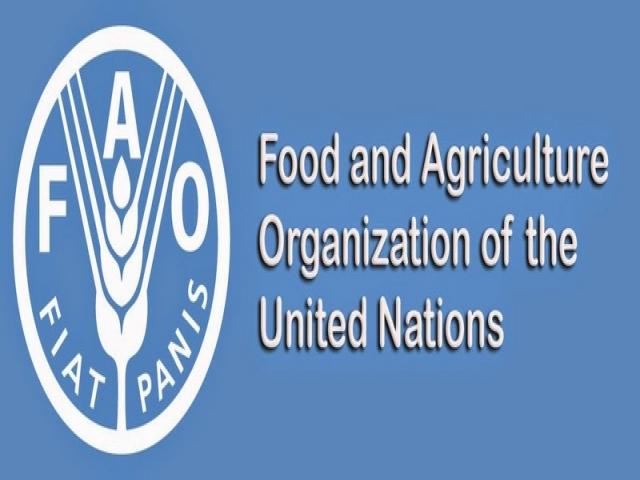 فائو ، سازمان خواربار و کشاورزی ملل متحد