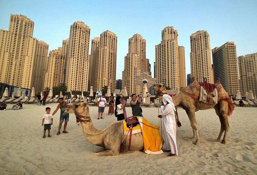 شتر سواری در ساحل جمیرا در بندر دوبی