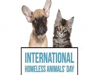 17 آگوست ، روز جهانی حیوانات بی خانمان