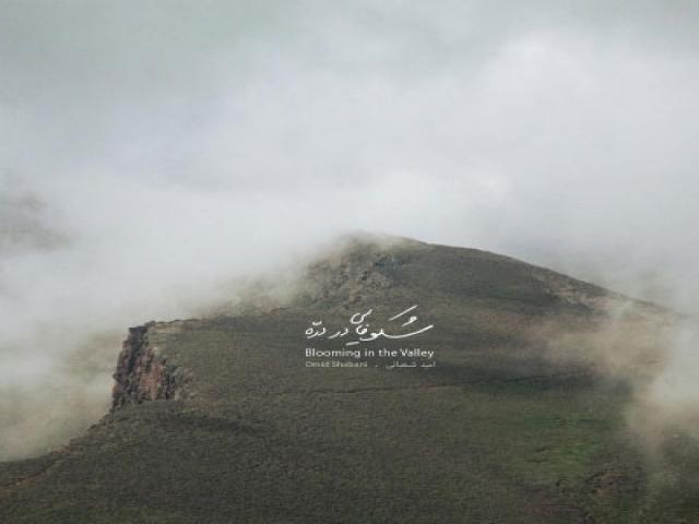 آلبوم «شکوفایی در دره» از امید شعبانی منتشر شد