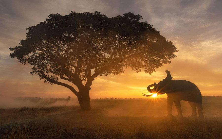 عکسی خیره کننده ای از یک کشاورز و فیل ، تایلند