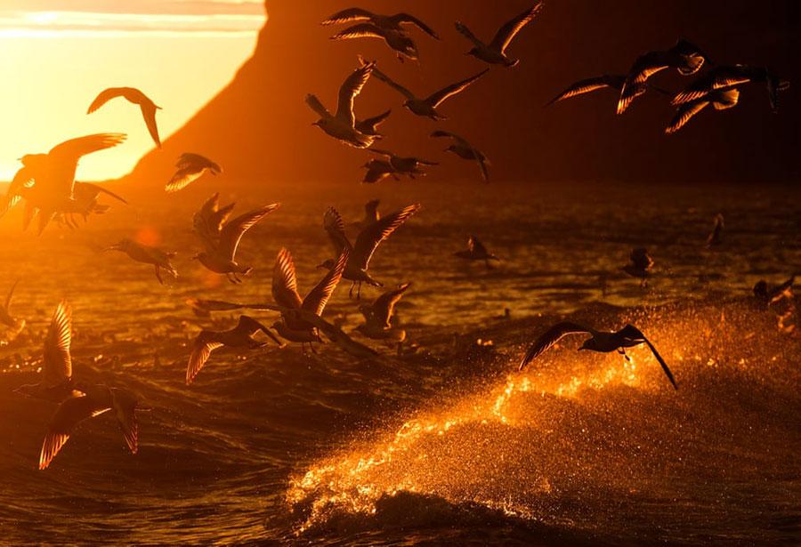 مرغان دریایی در سواحل شمالی بریتانیا