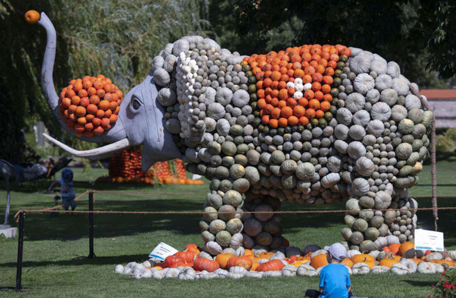 آماده کردن یک ماکت فیل با کدو تنبل برای جشنوارهای پاییزی در آلمان