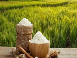 خودکفا شدن ایران در تولید برنج