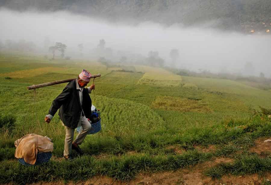 مرد روستایی درلالیتپور نپال در حال حمل نذورات اهدایی خود به معبد در جشنواره آیینی شیکالی
