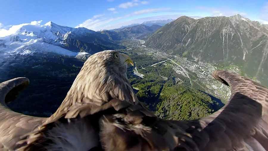 پرواز عقاب آموزش دیده 9 ساله بر فراز کوهستانهای فرانسه