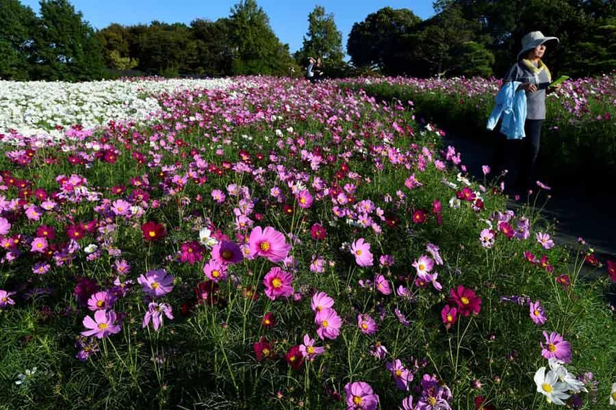 پارکی در شهر هاماماتسو ژاپن