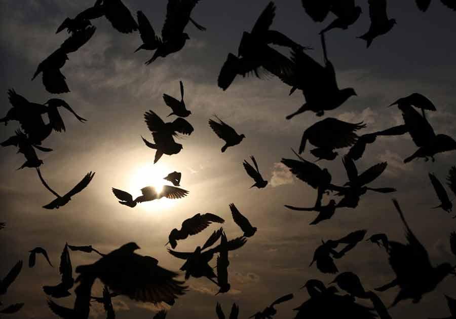 پرواز پرندهها در غروب شهر کابل
