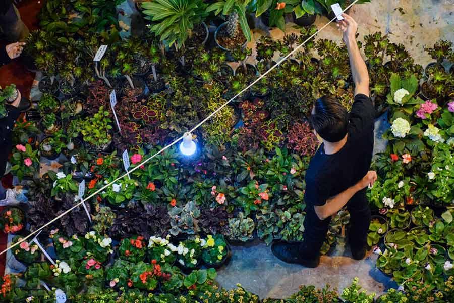 نمایشگاه گل و گیاه کرمان