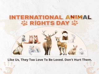 10 دسامبر ، روز جهانی حقوق حیوانات