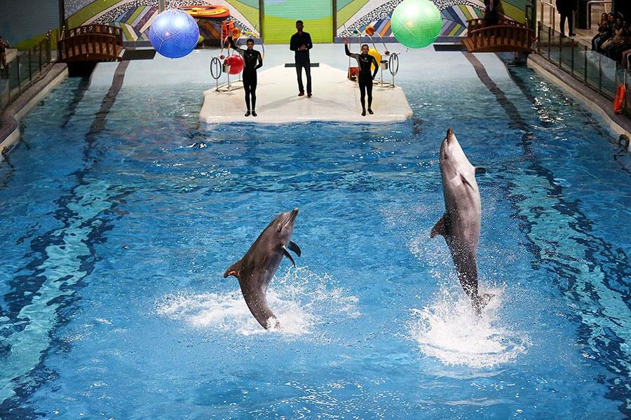 جزئیات دلیل مرگ دلفین در دلفیناریوم برج میلاد - Details of the reason for Dolphin's death at Milad Tower Dolphinarium