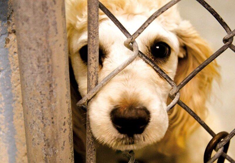 ممنوعیت حیوانآزاری در کتابهای درسی آموزش داده میشود - The prohibition on animal abuse is taught in textbooks