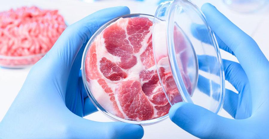 در حال بررسی پروژه گوشت مصنوعی هستیم - We are investigating the Cultured meat project