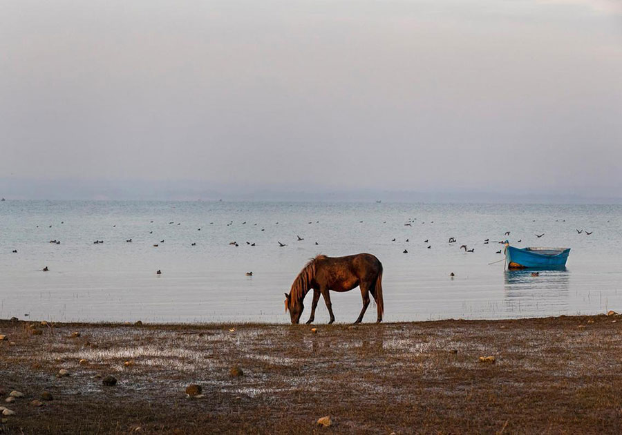 یک اسب در سواحل هند