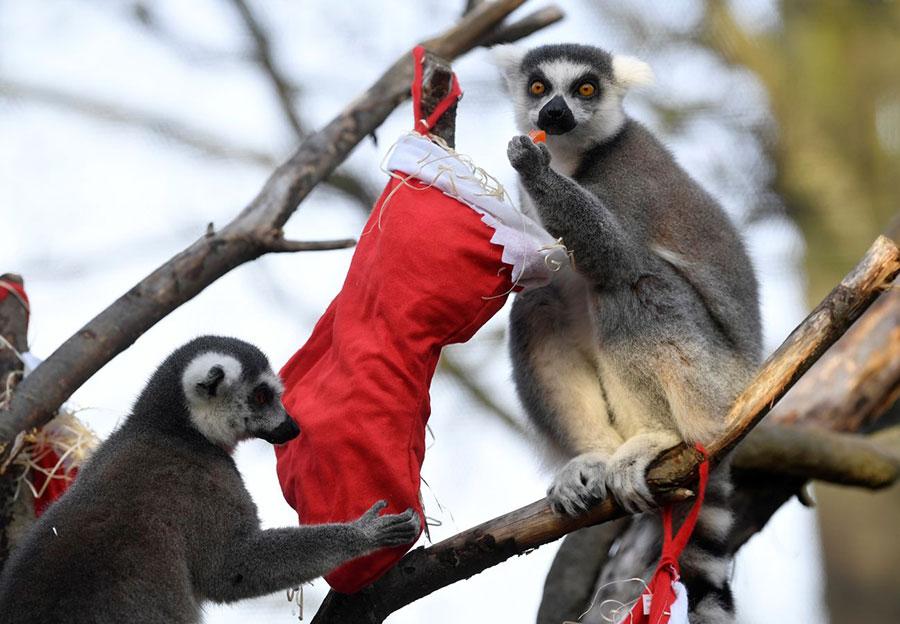 حال و هوای کریسمسی در باغ وحش لندن