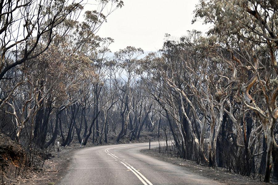 جنگلی سوخته در استرالیا