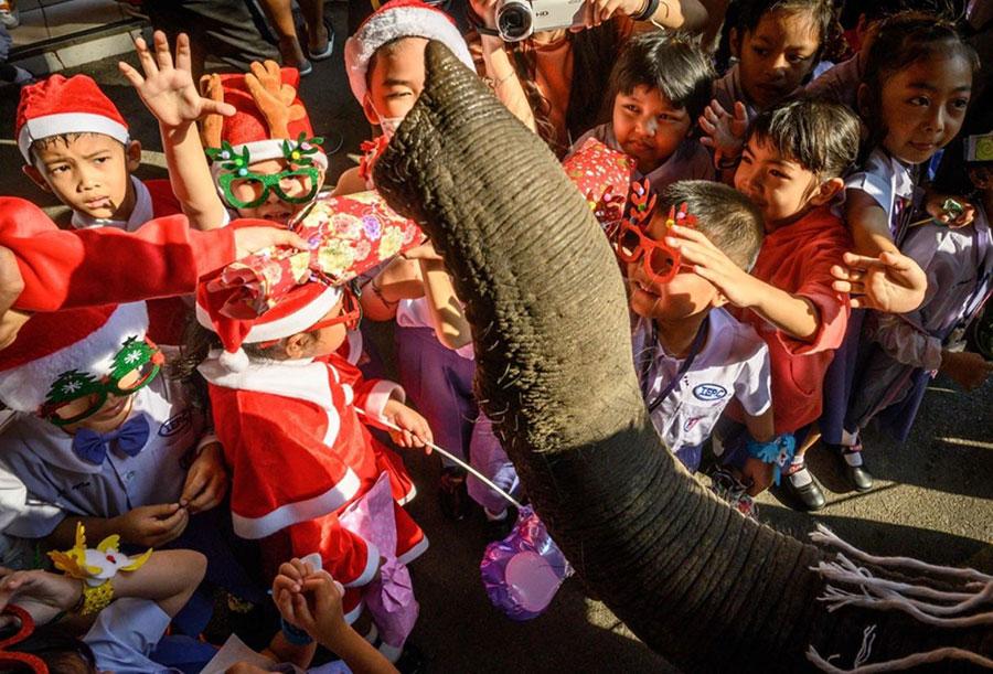 دریافت هدایای کریسمس از فیل در مدرسهای در تایلند
