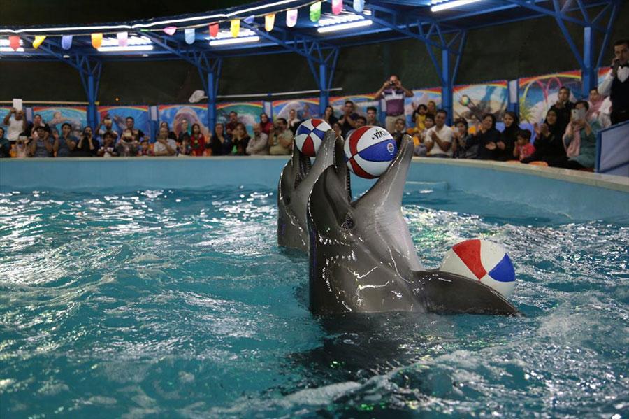 واکنش محیط زیست به دلیل مرگ دلفین برج میلاد - Department of Environment reaction due to death of Milad Tower dolphin