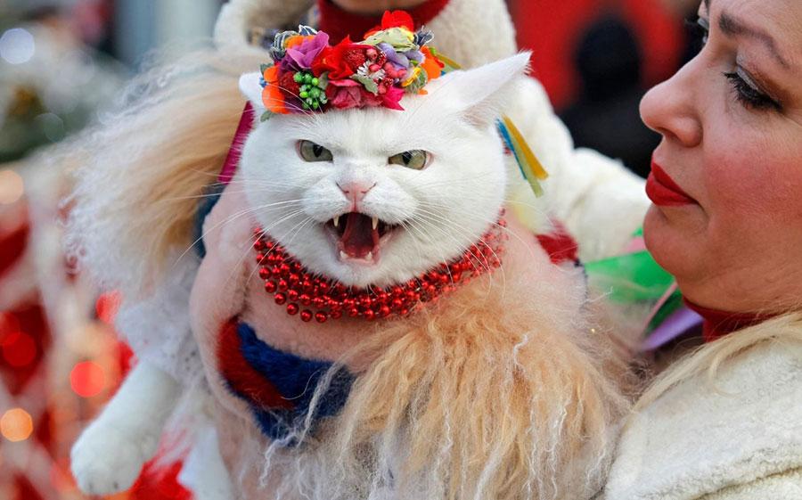 گربه ای در لباس محلی در جشنهای کریسمس ارتودکسها در کیف اوکراین