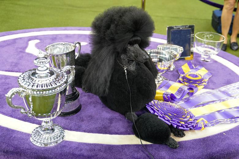 سگ برنده مسابقات سالانه سگ خانگی در نیویورک
