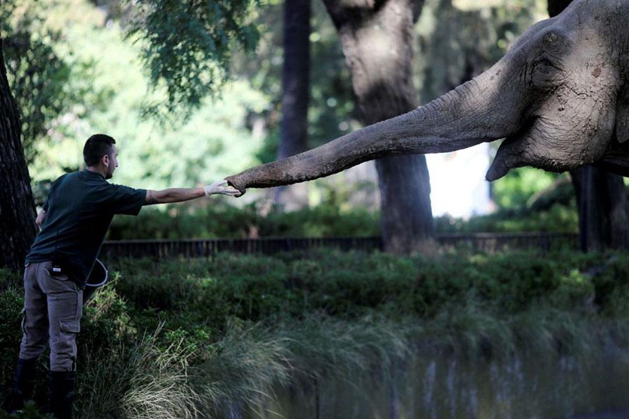 برخورد نزدیک دامپزشک و فیل 54 ساله در بوینس آیرس