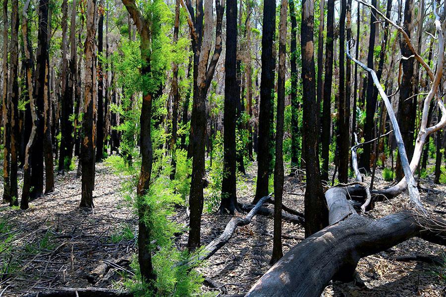 بندر ماکواری، استرالیا