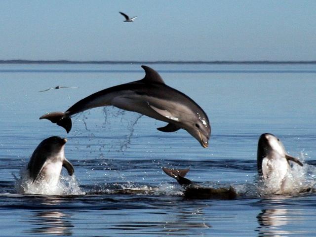 14 آوریل ، روز جهانی دلفین