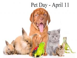 11 آوریل ، روز جهانی حیوان خانگی