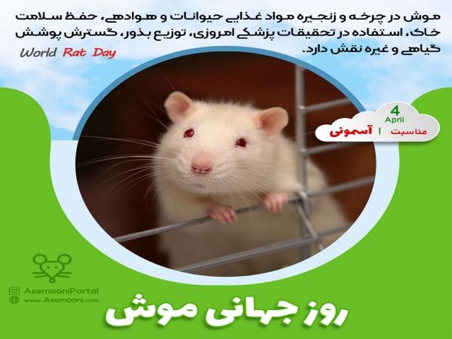 4 آوریل ، روز جهانی موش صحرایی