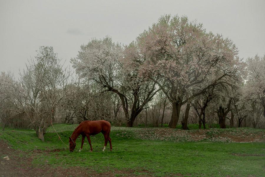 طبیعت زیبای بهاری در قزوین