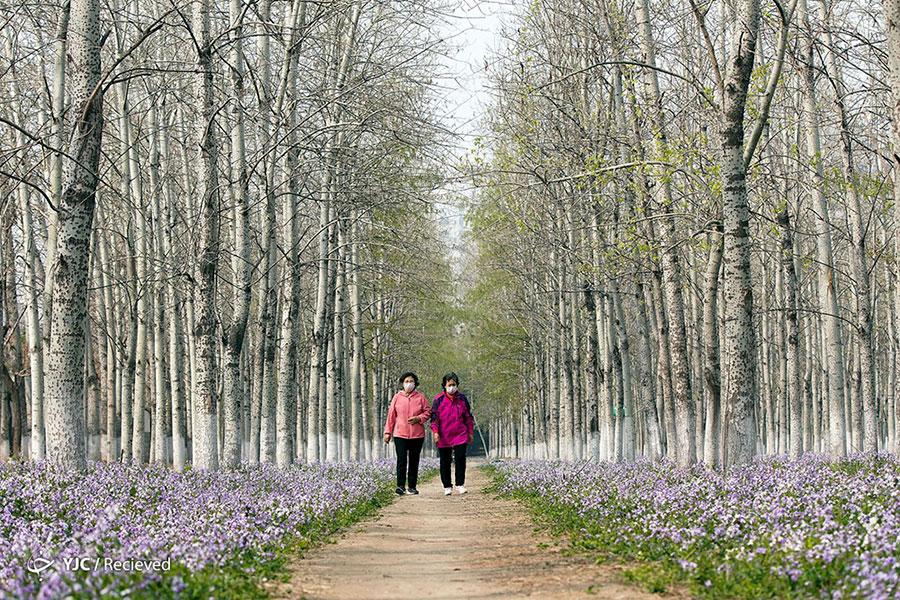 طبیعت بهاری چین