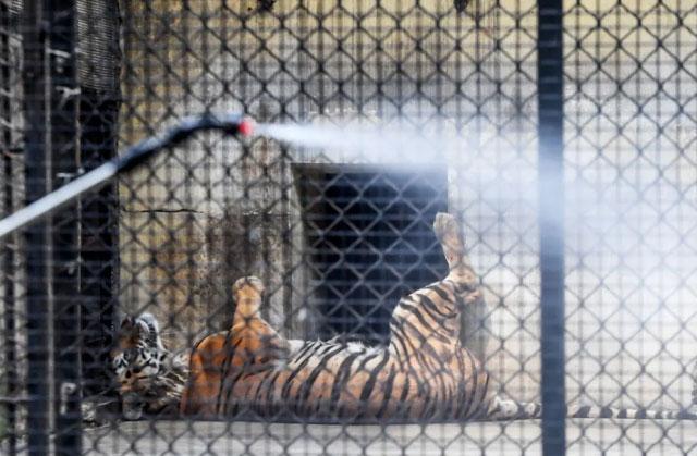 ضدعفونی باغ وحش شهر کلکته هند
