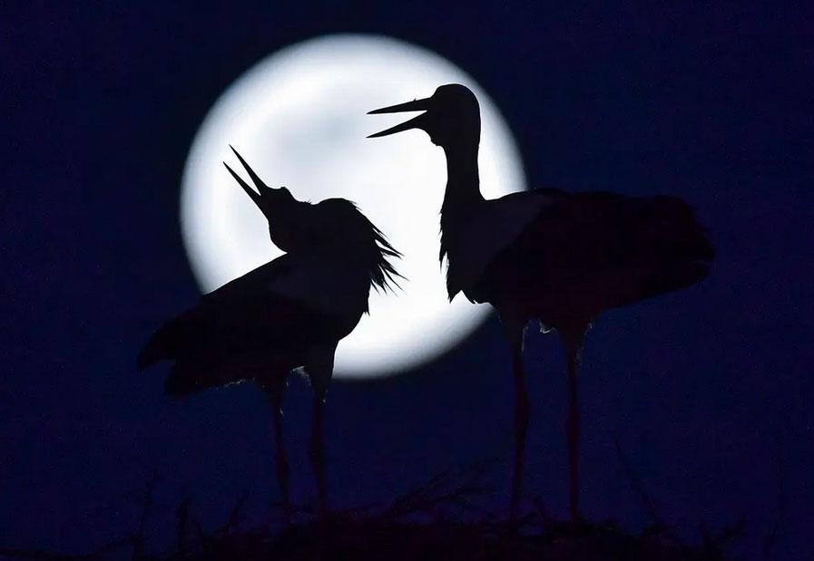 پدیده اَبَر ماه در شمال مقدونیه